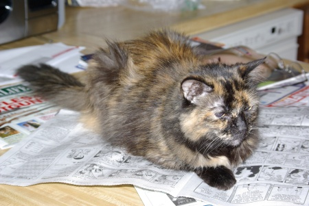 Meow, reminding her humans that paying attention to the cat is always more important than reading Dilbert - June 24, 2008