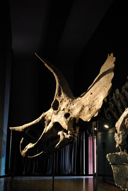 Heritage Auction's triceratops, for Jun 12, 2011 auction