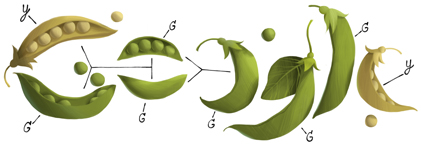 Google doodle - gregormendel11-hp