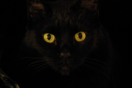 Does a black cat know she's a black cat?  Closing her eyes, she disappears.