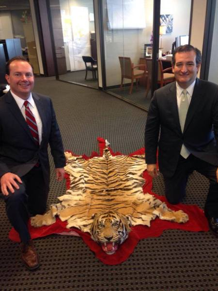 "U.S. Sen. Ted Cruz said: ""Did a little shopping for the office with United States Senator Mike Lee in Houston today."""
