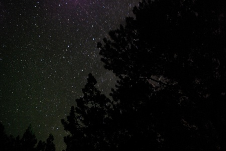 Abiquiu Stars - Time photograph of stars against a pinon pine, pointing north; Milky Way almost visible in the East.
