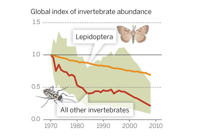 "Chart showing the decline of insects worldwide, from Yale e360: ""According to global monitoring data for 452 species, there has been a 45 percent decline in invertebrate populations over the past 40 years. DIRZO, SCIENCE (2014)"""