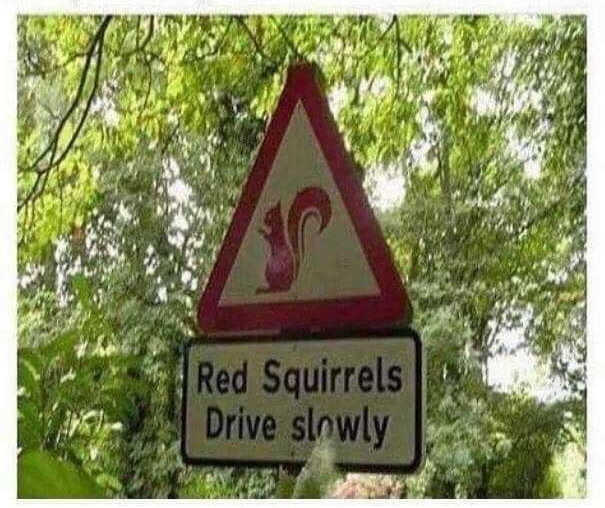 Red Squirrels Drive slowly sign, probably in Britian